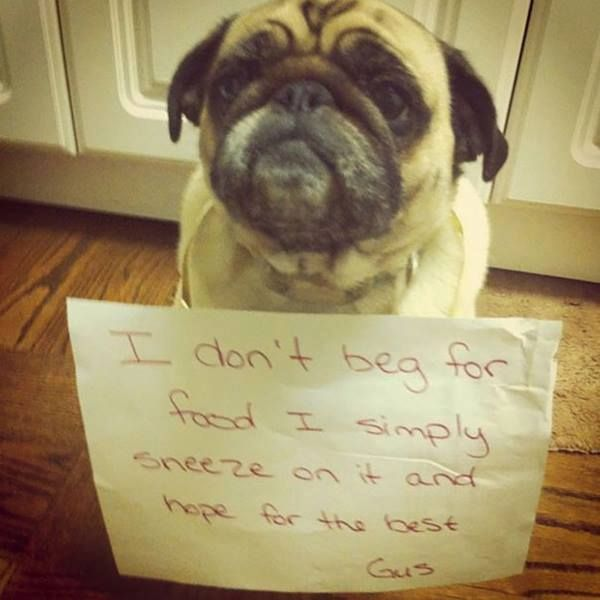 Dog Shaming  - Tap the pin for the most adorable pawtastic fur baby apparel! You'll love the dog clothes and cat clothes