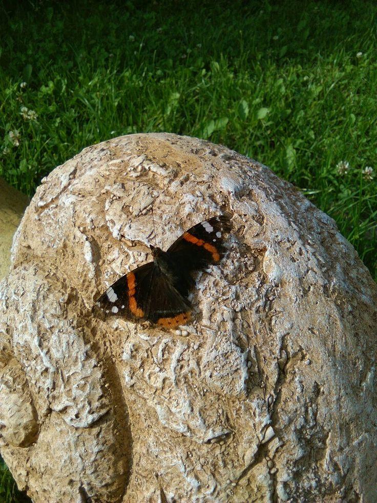 Mindig a kerti csigánkra száll de sajnos valami lecsipett a szárnyából!
