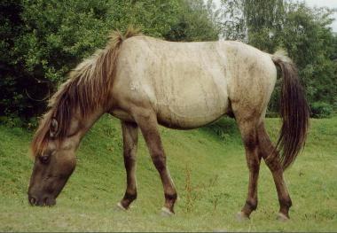 Rare Horse Coats 23 best images ...