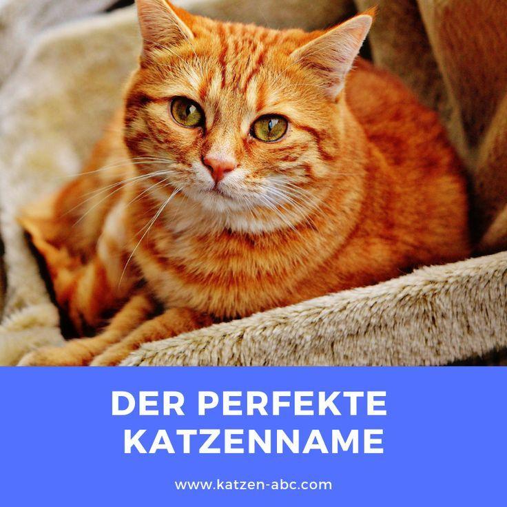Der Perfekte Katzenname Katzen