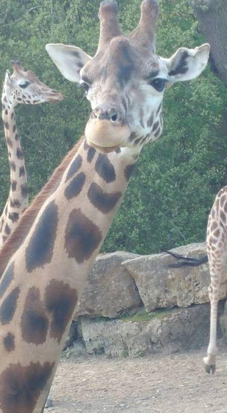 Longleat  Zoo, UK    Facebook