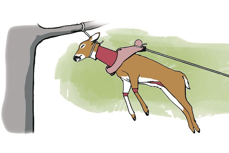 """We show you how to skin a deer with the """"golf-ball method."""" Find out how at HUNTING."""