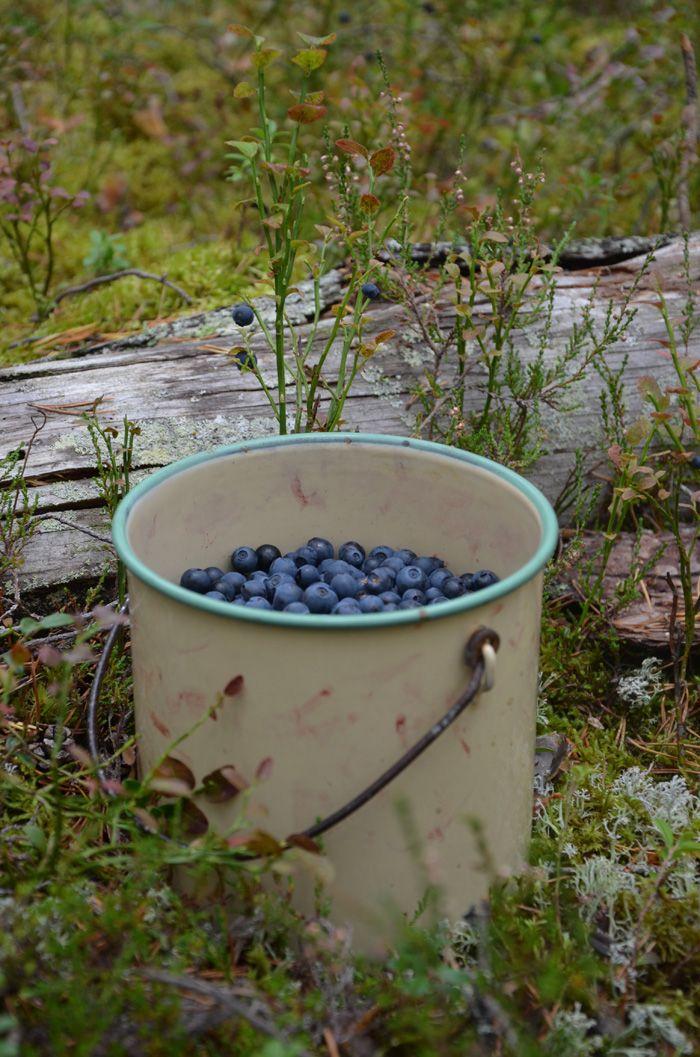 Blåbär i emaljhink - Blueberries