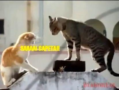 Vídeo - Gatos brigando - o outro lado deles - legendado...kkkk - clique na foto.