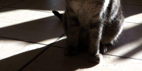 Chat_SERIE 2 : Un chat dans la maison > Appareil photo Bridge, Fujifilm Finepix S4000 > Retouches photo