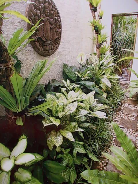 Tropical garden.. hidden pathway