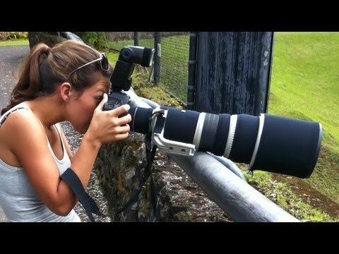 Bird and Wildlife Photography Equipment: Lenses, cameras, teleconverters, tripods, monopods #photgraphytalk #photographytips