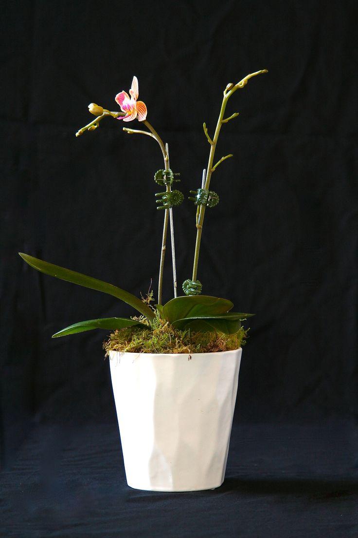 Orchid in ceramic