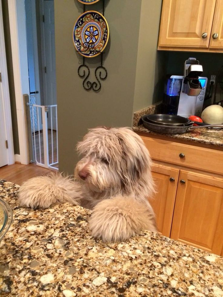 Finley looking for something to eat.