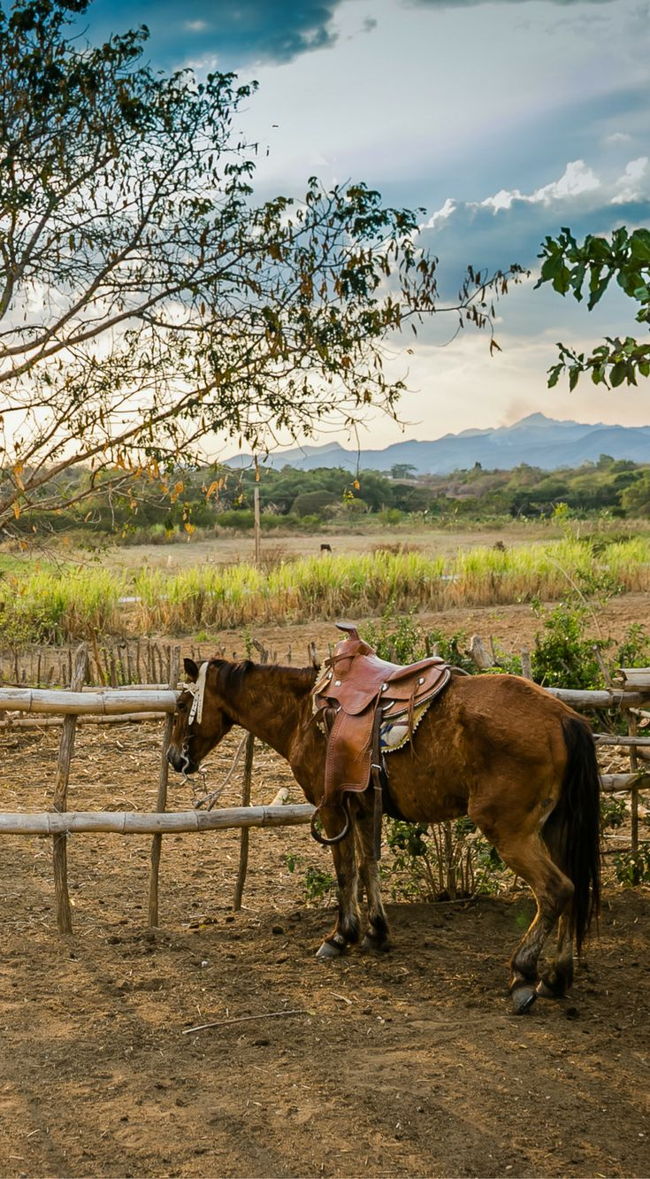 A horse tied up on a tobacco farm in Viñales Cuba. The photo was taken By Lina Stock on the Divergent Travelers Photography Tour in Cuba. The Divergent Travelers Adventure Travel blog showcases great stories and some of the best travel photography in the world. We run photography tours not just in Cuba but throughout the world. Click to see more about Cuba http://www.divergenttravelers.com/destinations/cuba/