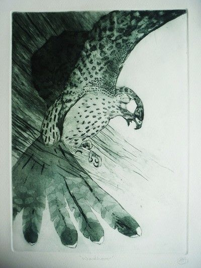 Kestrel by Louise Scott (etching)