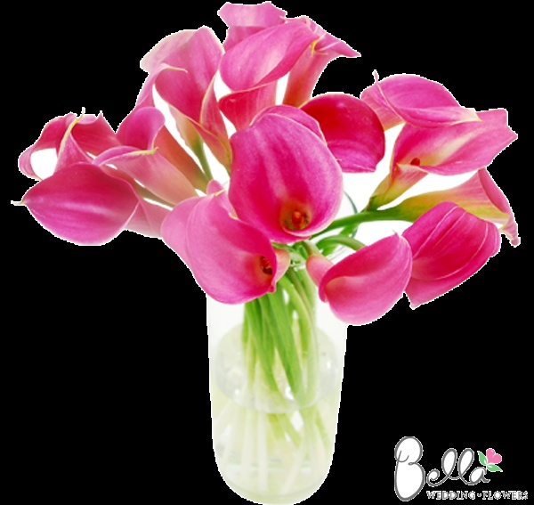 Hot Pink mini calla lilies have exceptionally pretty trumpet-shaped blooms with a hint of a wavy edge. Their gorgeous color and sleek lines look spectacular in hand tied bouquets and mix well with other types of wedding flowers. Although they may look delicate and graceful, mini calla lilies are actually quite hardy flowers, making them especially easy to work with. As always, our hot pink mini callas are shipped directly from the grower. Take advantage of our Free Shipping. $79