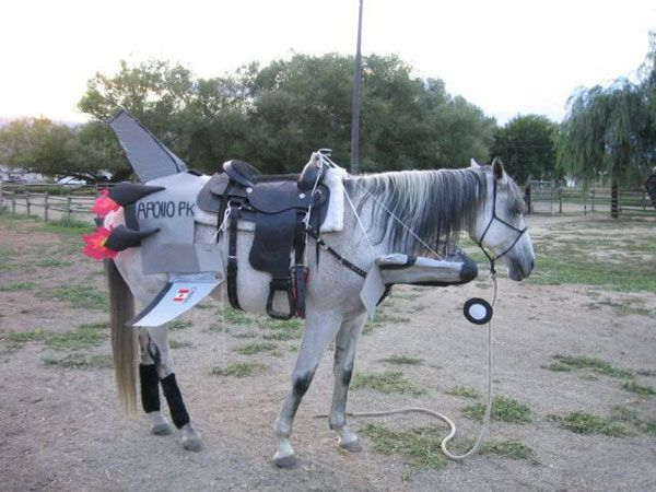 space shuttle horses arse - photo #7