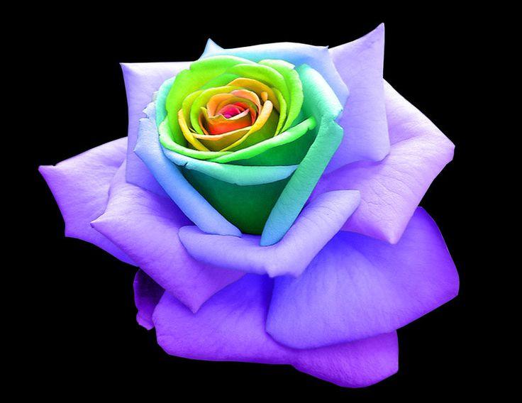 Rainbow Emoticons   Rainbow Rose by ~frozen--phoenix on deviantART