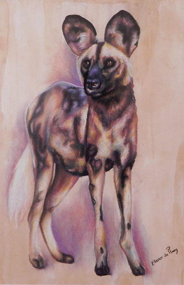 Wild Dog - Pastel on Coffee Paper Artist: Ellenor Hastie