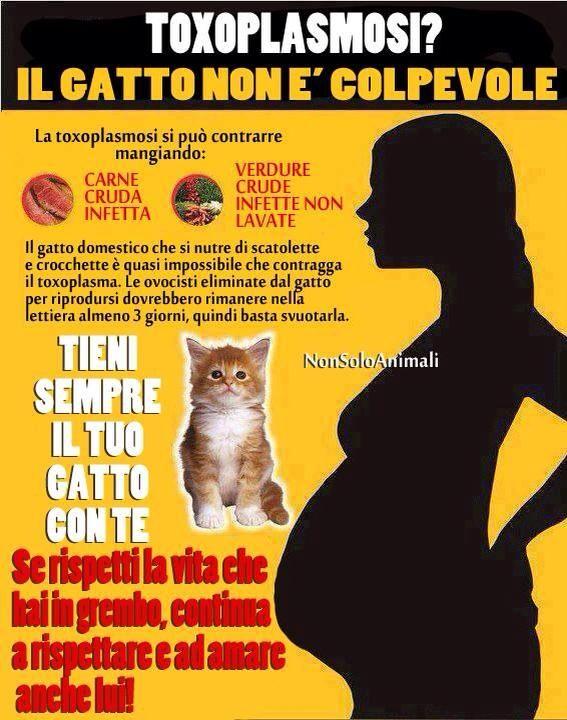 #gatti e #toxoplasmosi: facciamo chiarezza - #animali #gravidanza