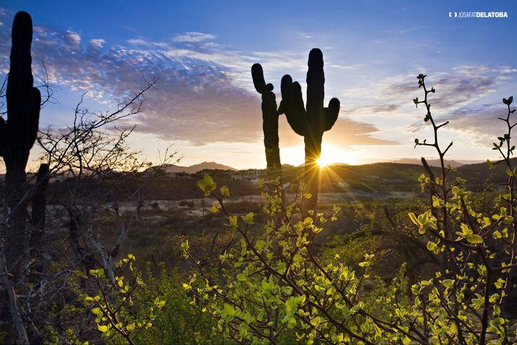 Desert of Los Cabos #josafatdelatoba #cabophotographer #landscapephotography #loscabos #bajacaliforniasur #mexico #desert