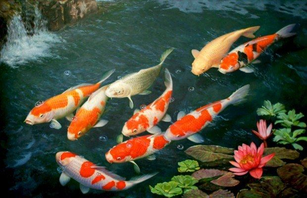 M s de 25 ideas incre bles sobre lago artificial en for Como criar peces koi