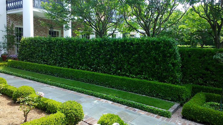Landscaping Around Hedges : Path around the formal rose garden is made with cut slate