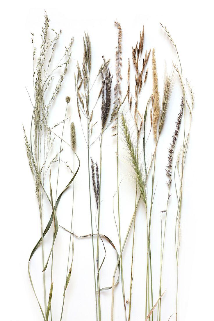 Prairie grass seed heads mary jo hoffman still on for Ornamental prairie grass