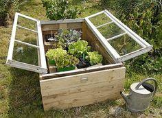 Vintage window cold frame greenhouse box