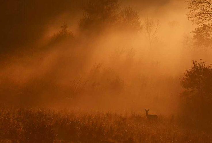 """KONKURS fotograficzny """"Po stronie natury"""" rozstrzygnięty. Mamy listę nagrodzonych [GALERIA]"""