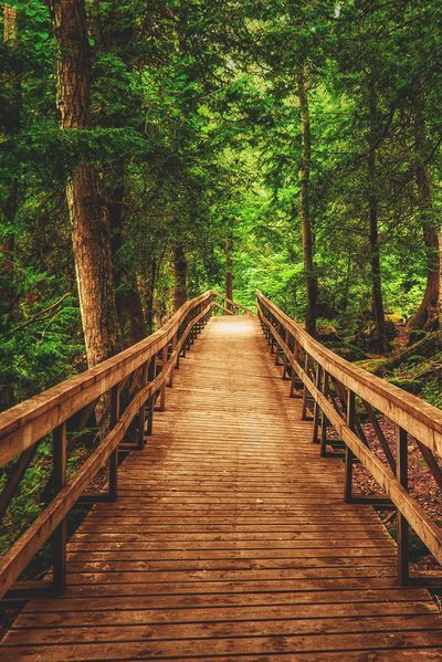 Walk On The Woods by Paul Murphy. Bruce Trail at Inglis Falls near Owen Sound, Ontario, Canada.