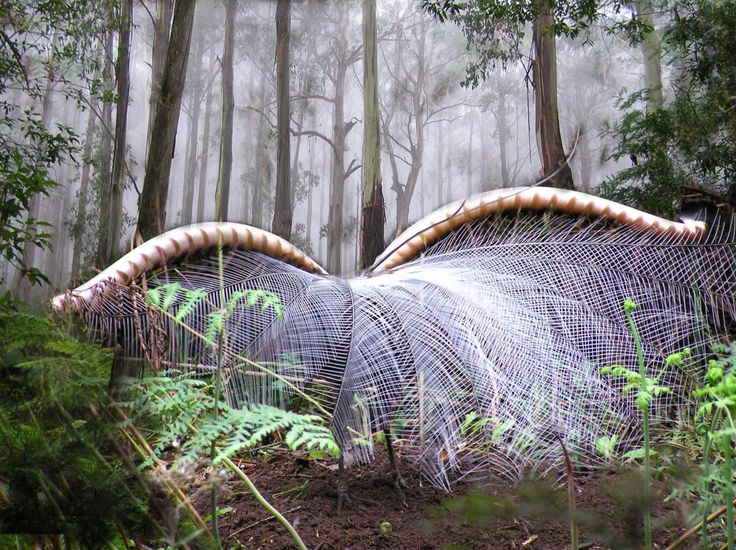 The Australian lyrebird is renowned for it's impressive vocal abilities. To be successful in finding a mate, each male lyrebird must be a skilled communicator.