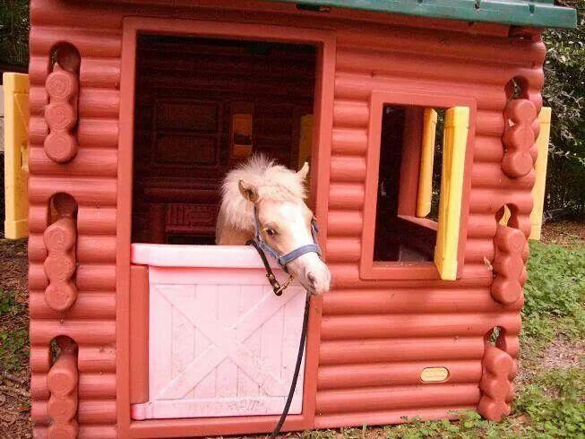 Mini Horse Barn :-)