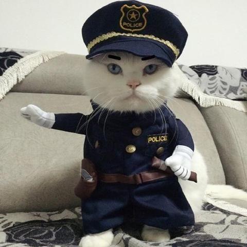 9 best Cat Costumes images on Pinterest | Cat costumes ...