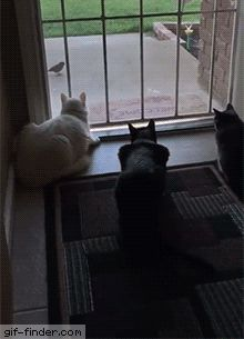 Dog Scares the Crap Out of Distracted Cats | Gif Finder – Find and Share funny animated gi