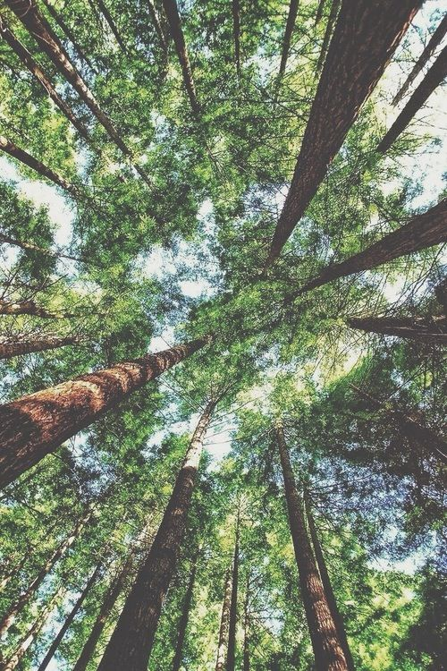But down deep, at the molecular heart of life, the trees and we are essentially identical. -Carl Sagan