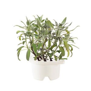 Click and grow.  super simple gardening.  Sage.Gardens Sage, Fab Com, Features, Refill Gardens, Growing Refill, Sage Refill, Products, 17 Bi Click,  Flowerpot