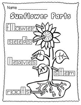 $ Sunflower Life Cycle and Plant Parts Unit