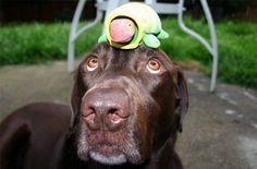 Once juegos caseros para la mente del perro | EROSKI CONSUMER. Estos juegos para perros son divertidos y ayudan al can a trabajar su inteligencia para evitar el aburrimiento y prevenir problemas de comportamiento