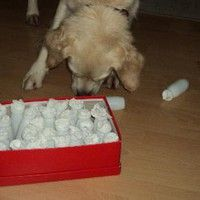 Do it Yourself Hundespiele | seite 1