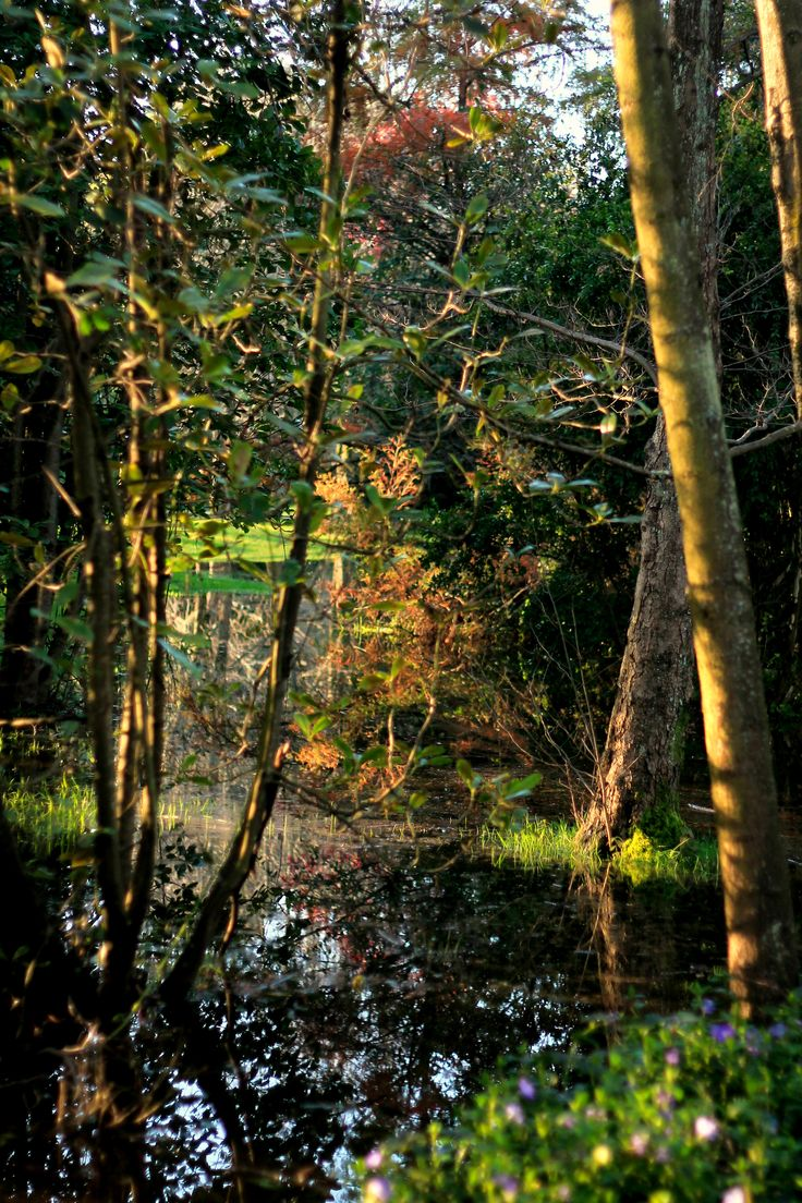 Parque Jorge Alessandri - Fotografía por J.Simone