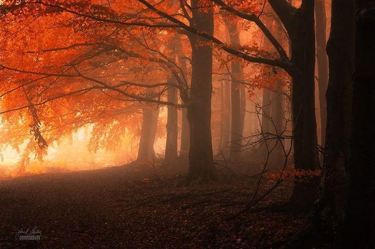 bosques otoñales de ensueño