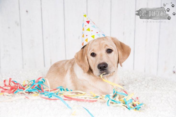 Verjaardag Labrador Juno - 3 jaar - Doggy Cakesmash-27