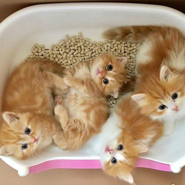 Reposting Rooony Style Via Crowdfire So Cute Babies Follow Us Rooony Style Cat Cute Cats Kittens Cutest Pretty Cats