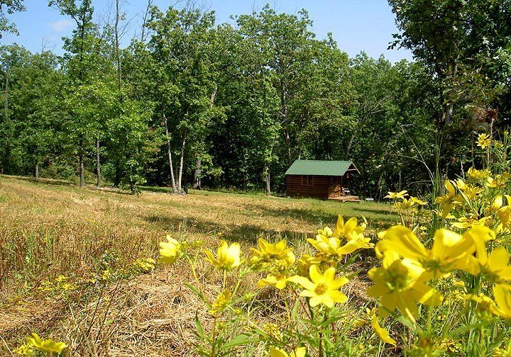 Cozy cabin with beautiful wildflowers in the ozarks cozy