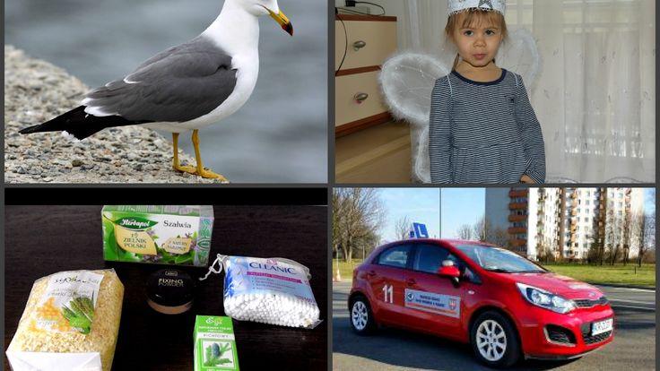 VLOG: Водительские права/ Настя-ангелок/ Голодные чайки/ Покупки