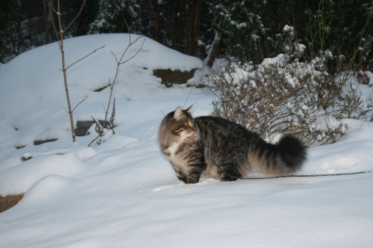 Dylan in Winter wonderland