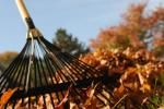 Leaf pickup schedule for fall leaves in Winston-Salem, NC.