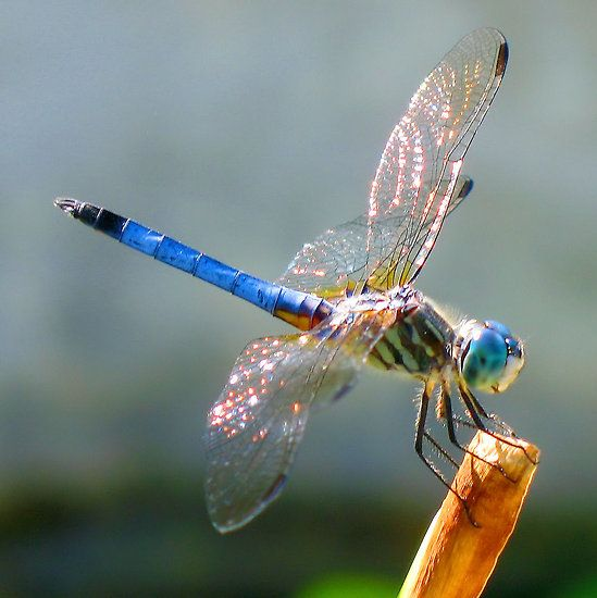Oh Dragonfly - [photo] by Sandra Moore