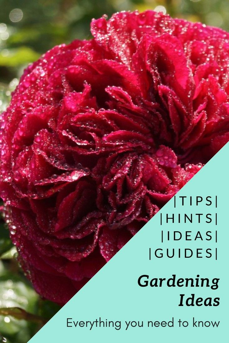 Both Coffee And Tea Grounds Are Great Additions When You Need To Raise The Acidity Of Your Soil Backyardgarden Backyard Garden Organic Gardening Backyard