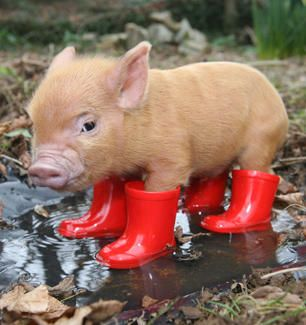 Look at his little wellies!