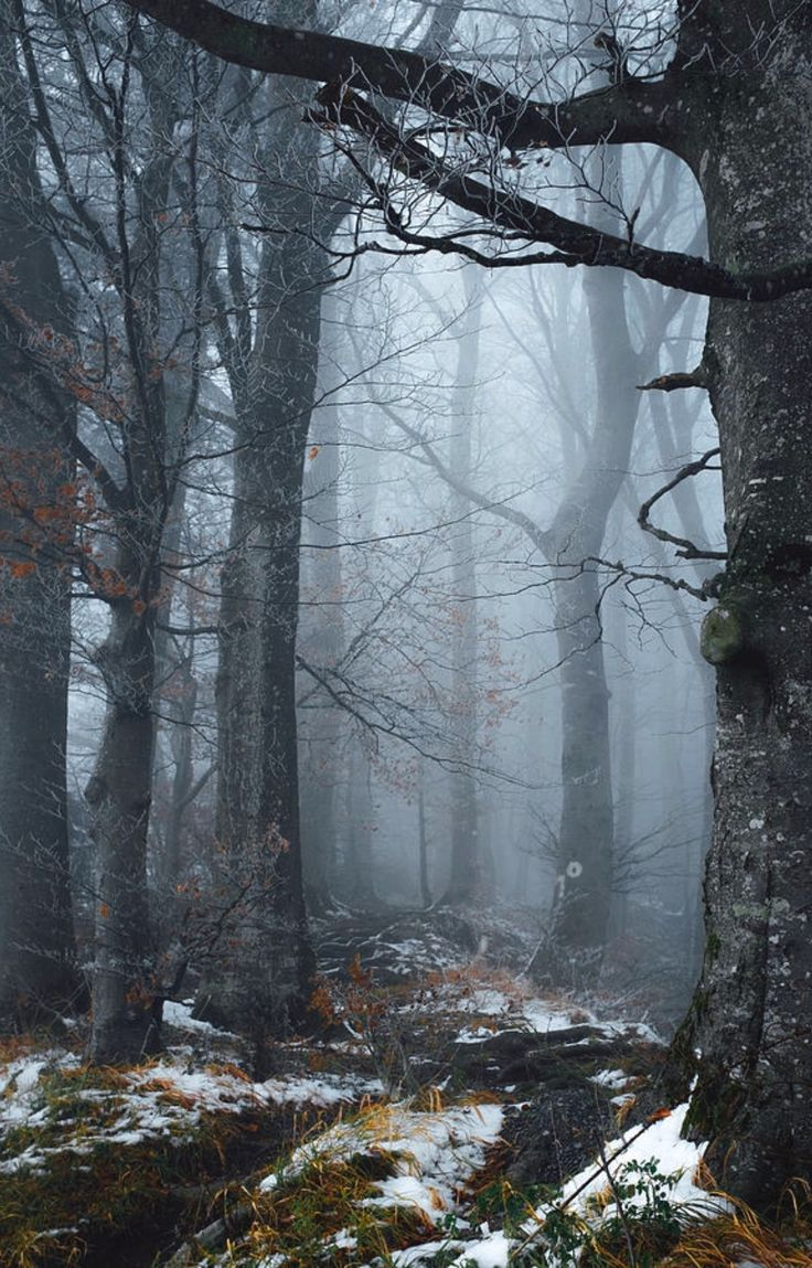 Late Autumn is a photograph by Elena Salminen. Misty day in the forest. Source fineartamerica.com