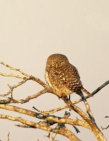 The African Bird of Prey Sanctuary Kids' stuff