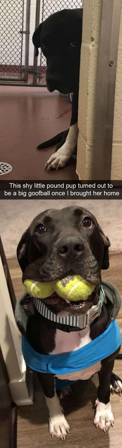 Funny Snapchats Dog Photo – 30 New Images – #Pictures #Funny #new #snapchat #SnapchatsDog Photo